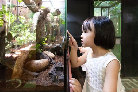 Asian Little Chinese Girl watching insects at the zoo Stock Photo