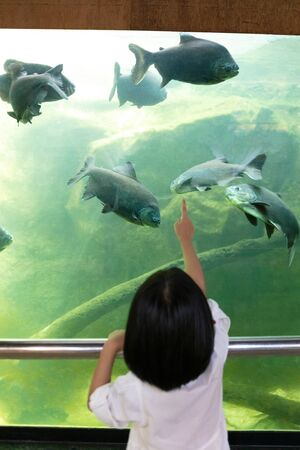 Asian Little Chinese Girl watching fishes in the aquarium