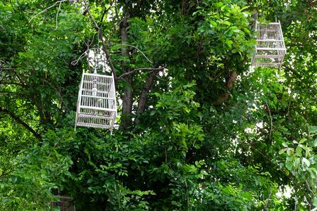 bird cage Lanterns on tree branch