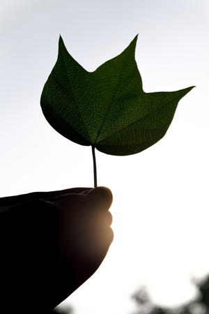 Blätter in der Hand Standard-Bild