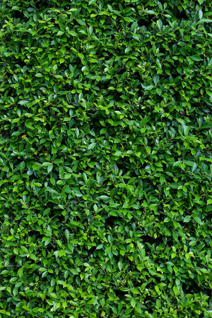 tileable: Green Bush. Seamless Tileable Texture.