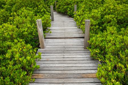 Holztreppe Weg auf grünem Garten