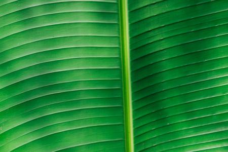 Grüner Bananenblatt Hintergrund abstrakt Lizenzfreie Bilder - 46785038