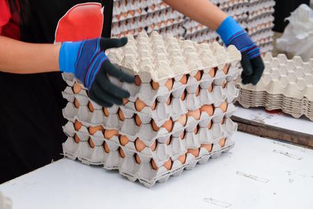 gallina con huevos: Mujer que sostiene el embalaje con huevos de gallina marr�n
