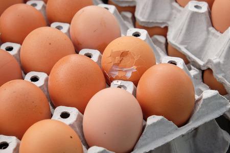 Egg, Chicken Egg Standard-Bild