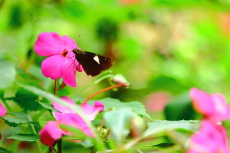 Butterfly and purple flower photo