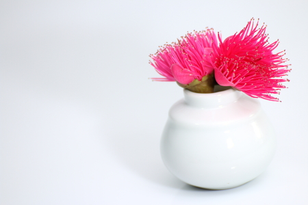 The rose apple in the vase photo