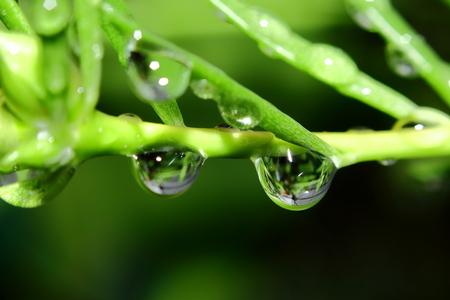 Dew after raining photo