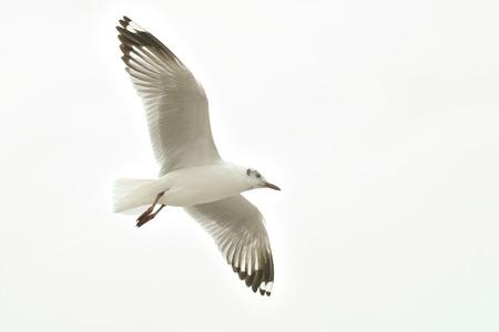 white bird: White bird in the sky