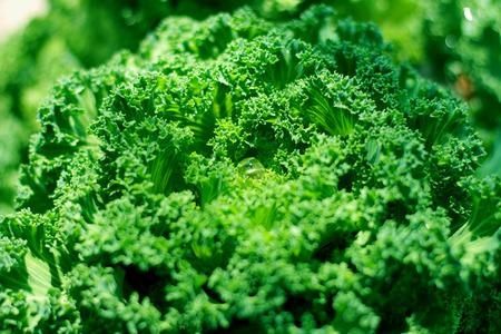 Green vegetable photo