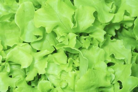 green vegetable: Green vegetable for salad.