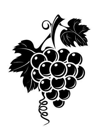 Black grapes icon isolated on white background. Black silhouette of grapes. Bunch of grapes. Vector illustration Imagens - 60503279