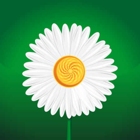 Chamomile, camomile, daisy wheel, daisy chain, chamomel. Daisy flower close-up. White daisy on a green background. illustration. Chamomile flower isolated on green background Illustration
