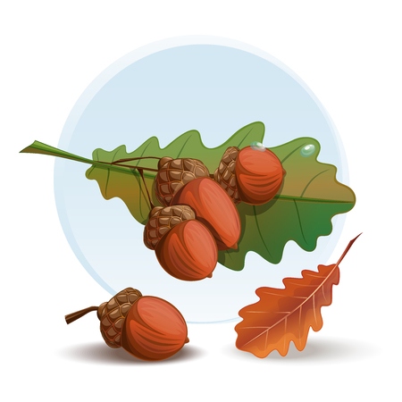 Acorn cartoon style illustration. Illustration