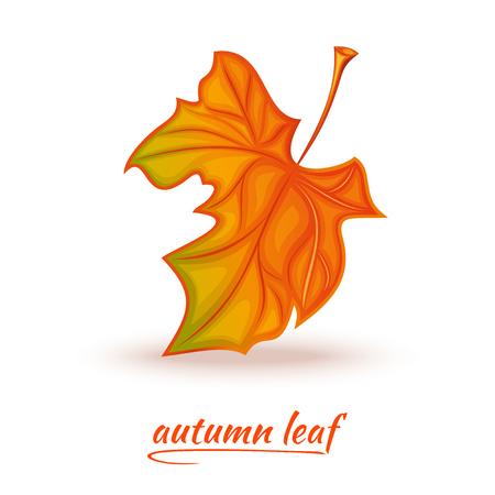 Yellow-red fallen autumn leaf. Autumn leaf icon design. Illustration