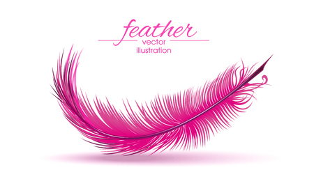 Light pink feather isolated on white background. Vector illustration.