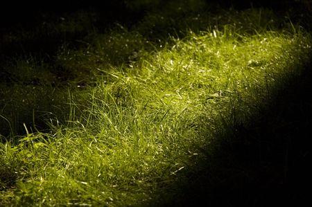 grassplot: grass-plot with ray of sunny light Stock Photo