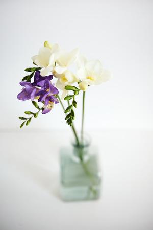 freesia: bouquet of fresh spring freesia. selective focus