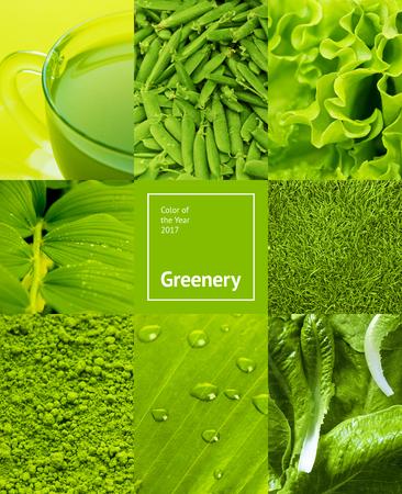 경향: 녹지 색상과 단풍 콜라주. 2017 년의 유행 패션 컬러