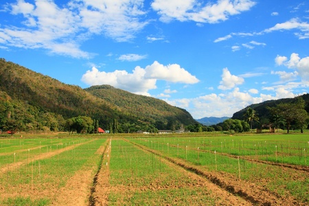 plots: vegetable plot, mountain landscape with blue sky