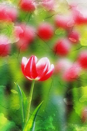 tulip on grunge background photo