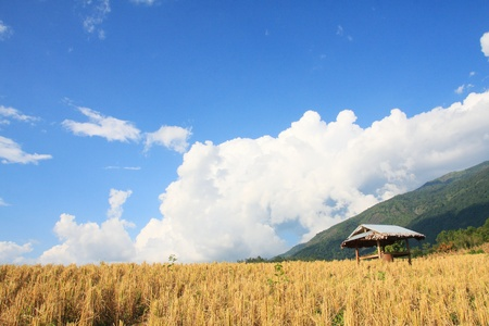 Hut in rice filed with blue sky, mountain view  Northern Thailand Stock Photo - 12534014