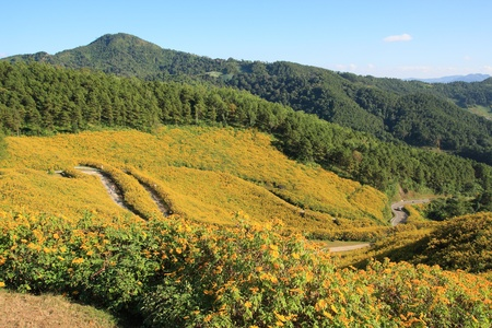 raod: sunflowers filed cover mountains Stock Photo