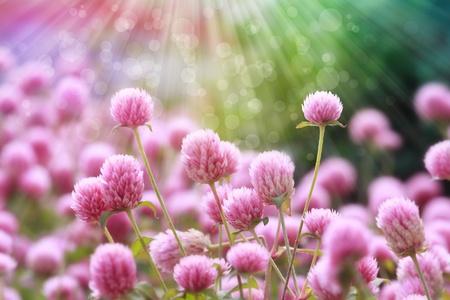 fleurs en fleurs avec le soleil abstrait rayons, la profondeur de champ Banque d'images