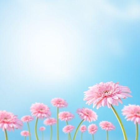 Beautiful flower with sunrays 스톡 콘텐츠