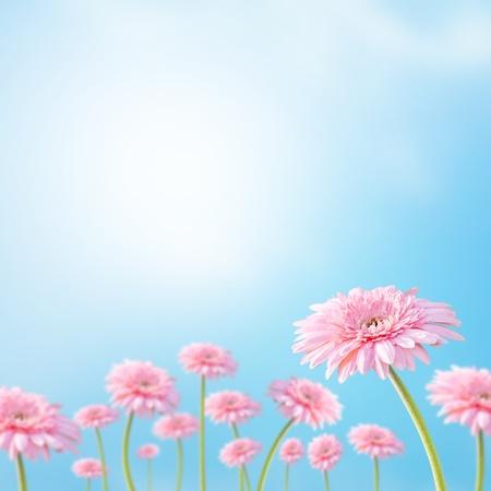 Beautiful flower with sunrays Standard-Bild