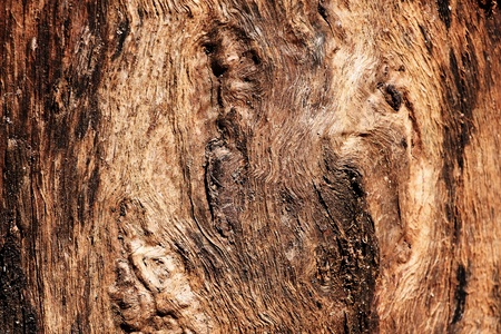 wood texture, abstract background photo