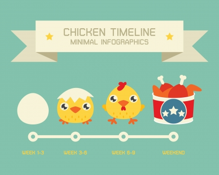 baby chicken: Chicken life circle, vector