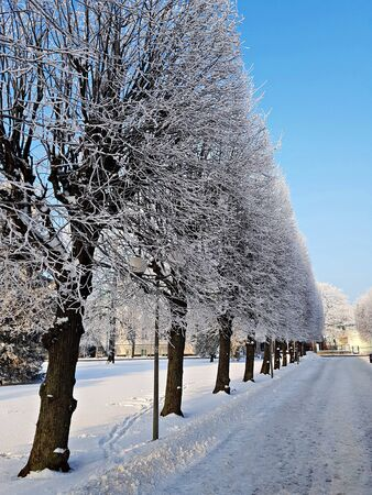 Winter frosty landscape with fluffy white snow on the ground and trees in the forest. 写真素材