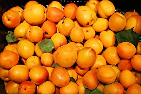 Ripe juicy apricots harvested from trees in a home garden and stacked in trays.