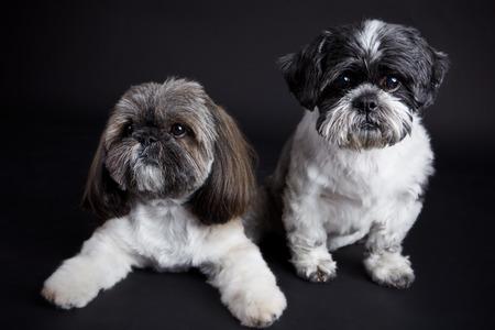 Portret van schattige kleine honden