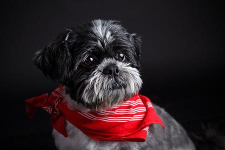 Modieuze hondje dragen van een hoofddoek
