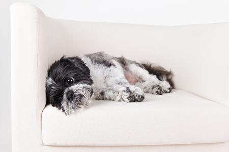 Vermoeide hond die op de bank