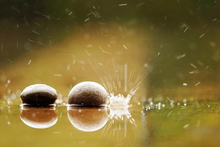 explotion: marco shot of mushroom in raining day explotion spoild Stock Photo