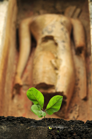 small tree: A small tree in front of a Buddha statue. Stock Photo