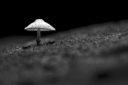 Mushroom pops out of the ground naturally., Black and white color