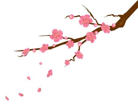 Pink peach flower illustration
