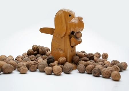 dog with walnuts photo