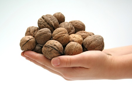 hand of a child with walnuts photo