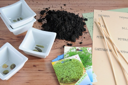 dill seed: to plant herbs