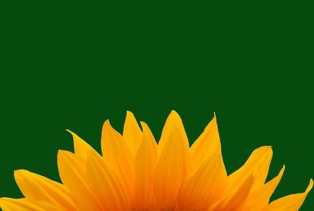 textfield: sun flower Stock Photo