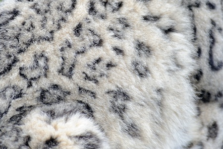 snow leopard: Snow leopard close up abstract fur