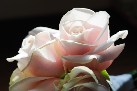 backlit: Closeup deatil of brides pink roses at wedding
