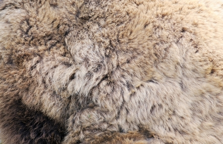 Texture of real brown bear fur closeup, use as background