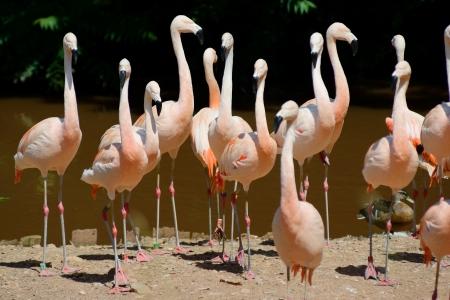 plummage: Un grupo de flamencos de pie en una isla cerca del agua en un d�a soleado Foto de archivo