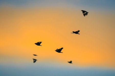 bipedal: birds flying back home in sunset